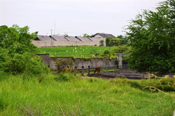 Land for sale in canggu near echo beach – TJCG031