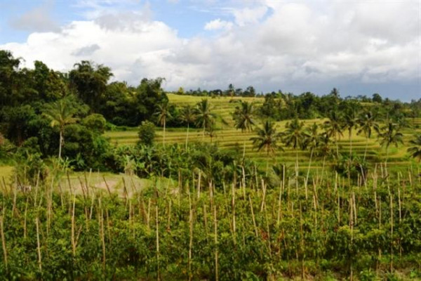 SOLD !!! land for sale in Tabanan at jatiluwih terraced rice field view