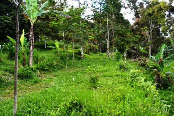 rice field and mountain view land for sale in Tabanan – TJTB011