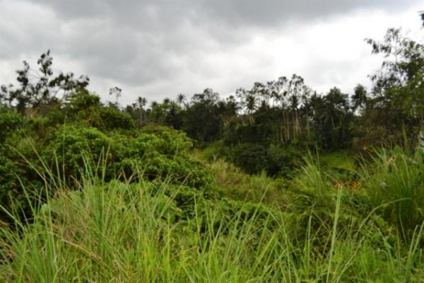 Land for sale in Ubud, 4900 sqm near The Chedi Hotel – TJUB009