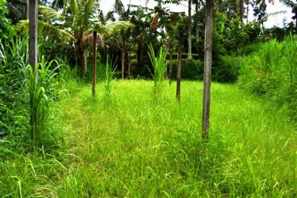 Land for sale in Ubud with beautiful rice field view – TJUB041