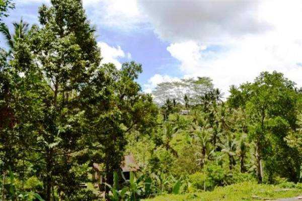 land for sale in Ubud tegalalang – TJUB042