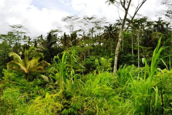 Land for sale in Ubud, 228 are in Calo Tegalalang – TJUB060