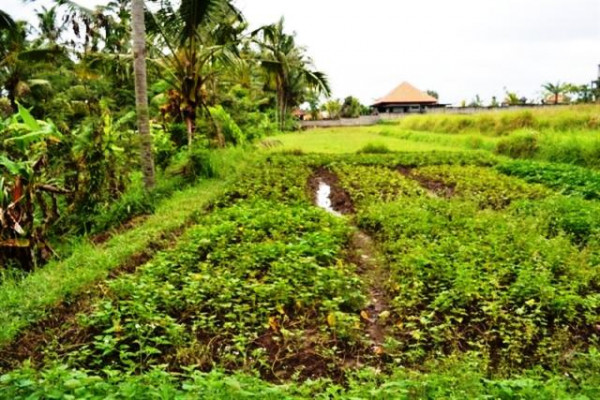Land for sale  in Ubud, 60 ares with beautiful view in Katik Lantang