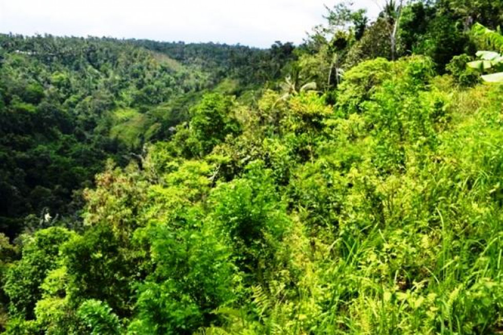 land for sale in Ubud 65 are overlooking to ayung river – TJUB065