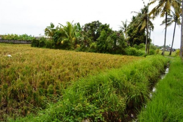 land for sale in Ubud near Bali bird Park – TJUB070