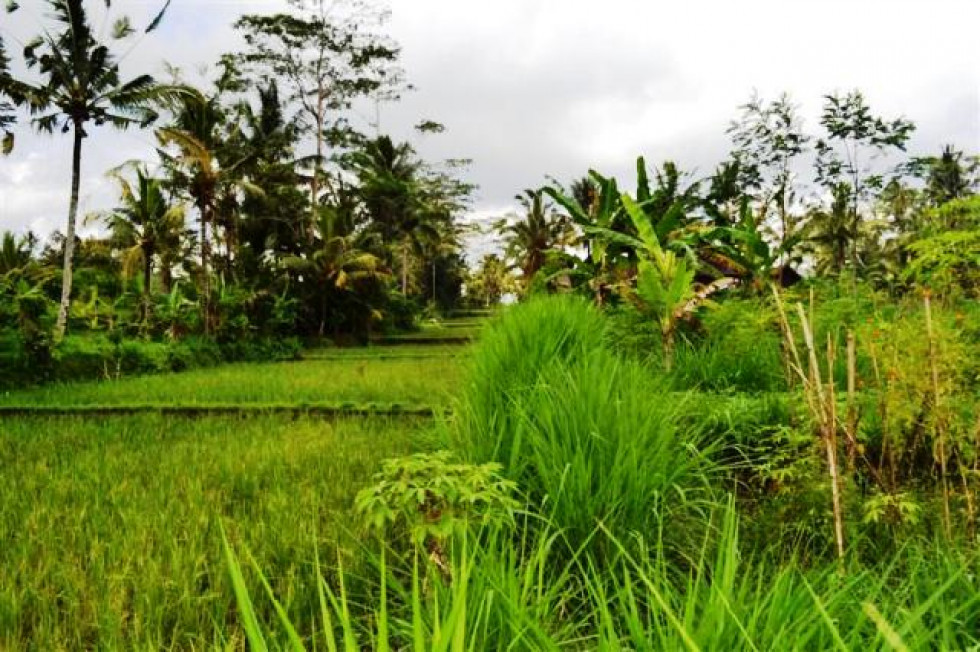 Land for sale in Ubud with nice view – TJUB075