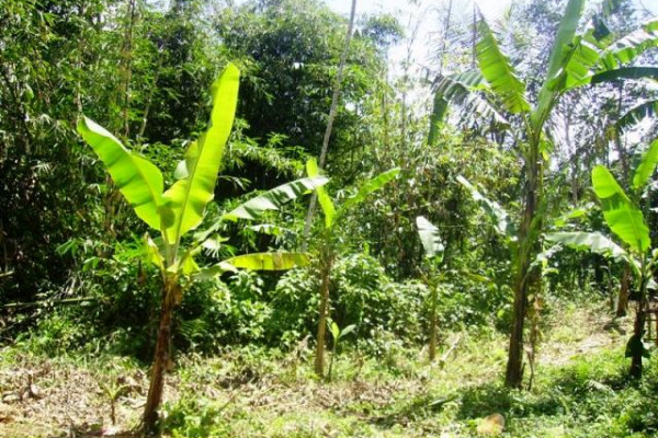 Land for sale in Ubud tegalalang – TJUB076
