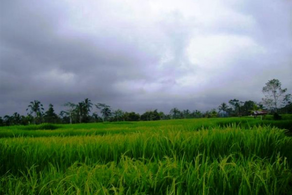 land for sale in Ubud near Pura Gunug Kawi – TJUB079