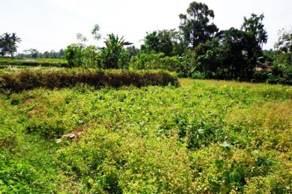 land for sale in Ubud near by Maya Ressort – TJUB088