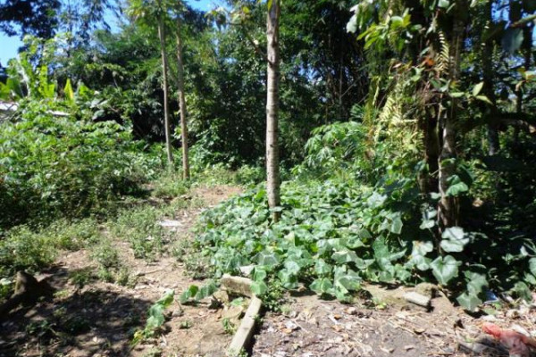land for sale in Ubud suitable for villa – TJUB090