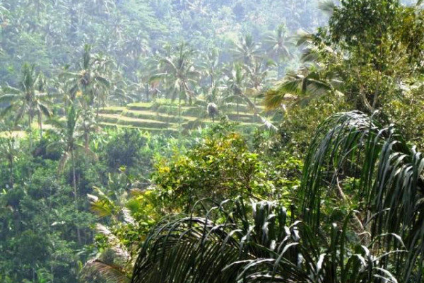 Land for Sale in Ubud only USD 14 / m2 – TJUB091