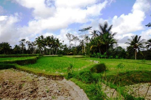 Land for sale in Ubud overlooking rice paddies in Pejeng – TJUB092