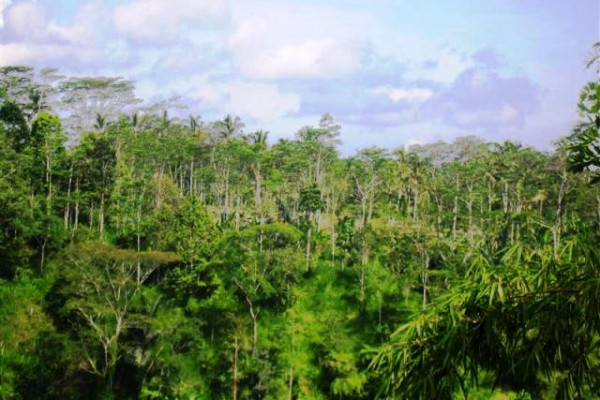 land for sale in Ubud with stunning river view – TJUB097