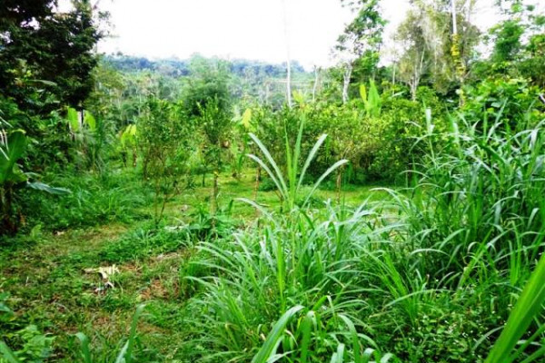 rice field view land for sale in ubud – TJUB098