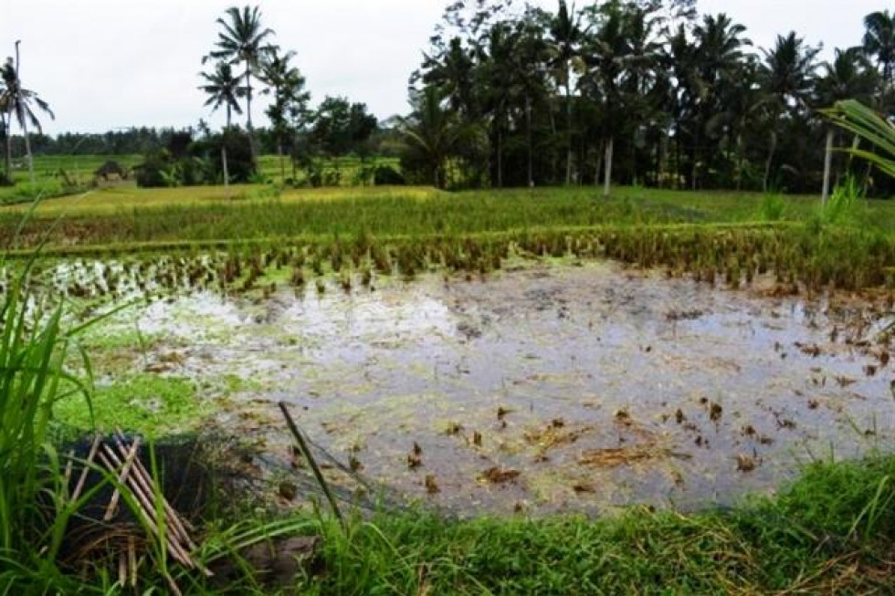 land for sale in Ubud view to the river valley – TJUB103