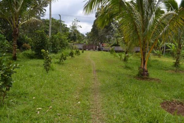 land for sale in Bedugul Bali – TJBE006