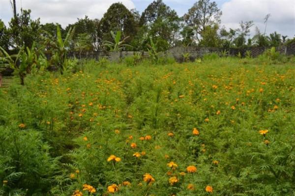 Land for sale in Bedugul roadside freehold  – TJBE008