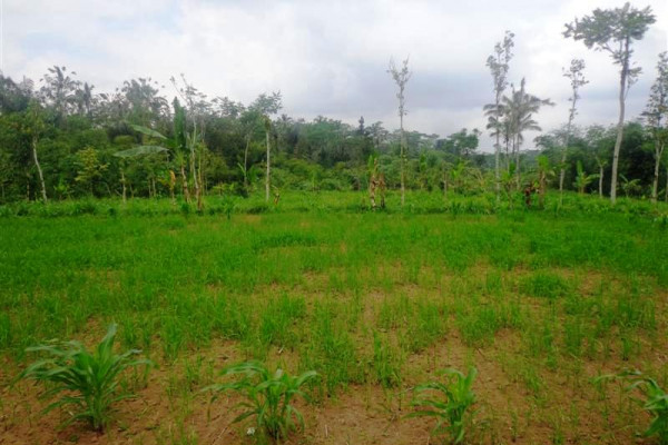 Cheap land for sale in Ubud – TJUB111