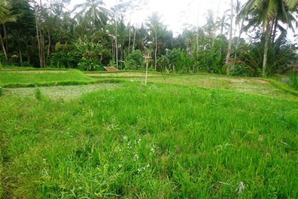 Land for sale in Ubud suitable for villa – TJUB109