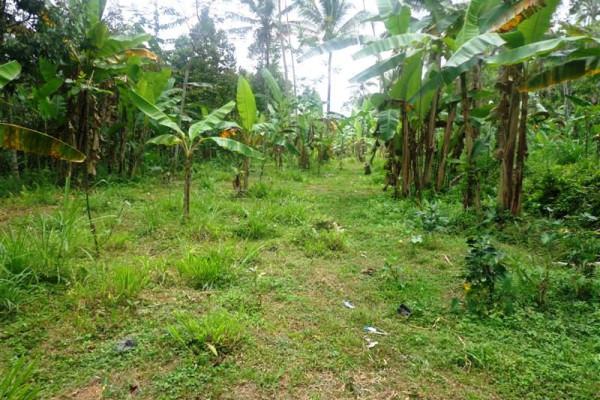 Ubud land for sale good for investment – TJUB112