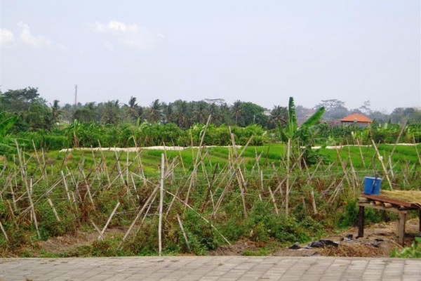 Land For sale in Canggu Bali with terraced rice fields view – TJCG055