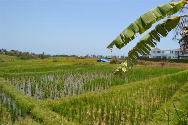 Beautiful Rice Fields Land For sale in Canggu – TJCG061