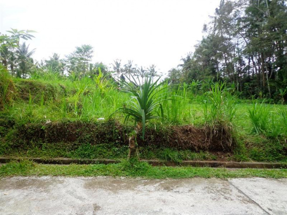 Land For Sale In Ubud Pejeng With rice paddy view – TJUB122