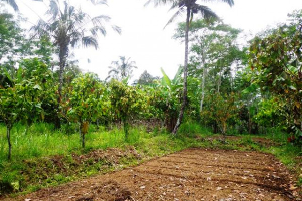 Land for sale in Tegalalang Ubud suitable for villa – TJUB126