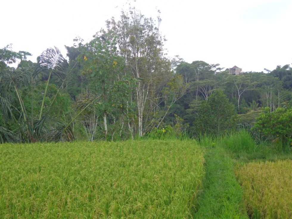 Land for sale in Ubud with beautiful Rice fields view in Ubud Tegalalang – TJUB140