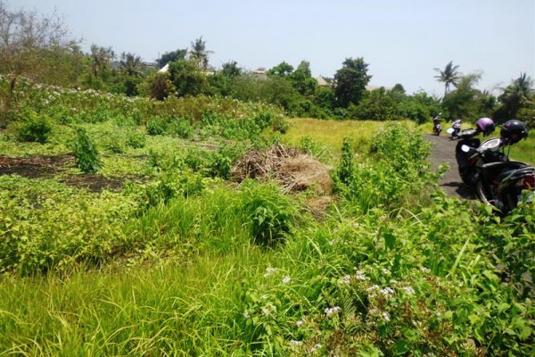 Potential rice fields view land for sale in Canggu
