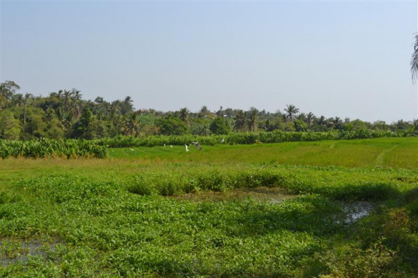 Land for sale in Tiying Tutul Canggu – TJCG069