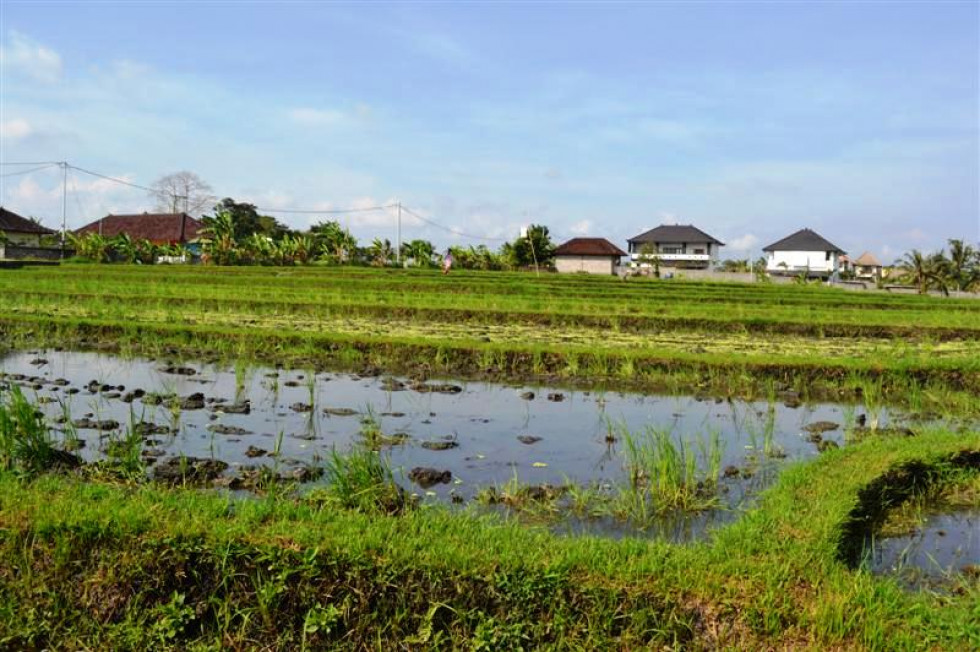 Magnificent view land for sale in Canggu – TJCG072