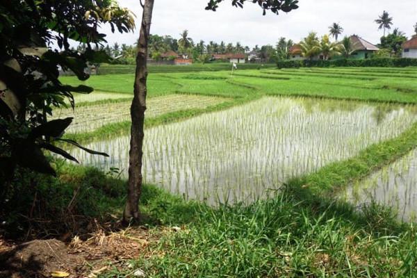 Roadside land for sale in Canggu – TJCG074