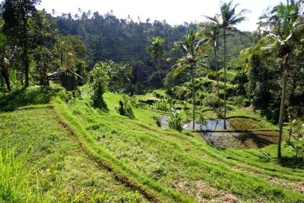 Stunning rice fields view Land for sale in Ubud Bali – TJUB114