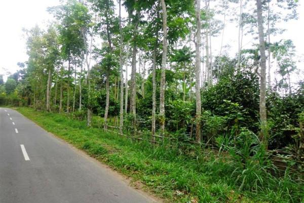 Stratategic location Land for sale in Ubud – TJUB117