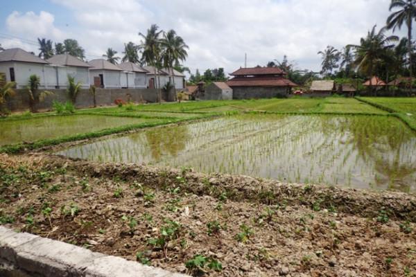 Roadside Land For sale In Ubud Bali – TJUB119