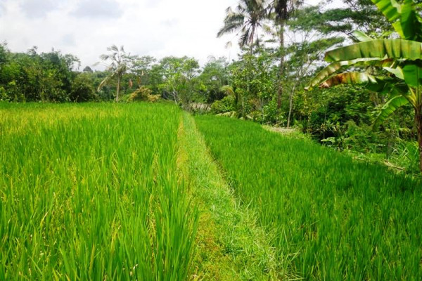 10 acre affordable Land for Sale In Tegalalang Ubud