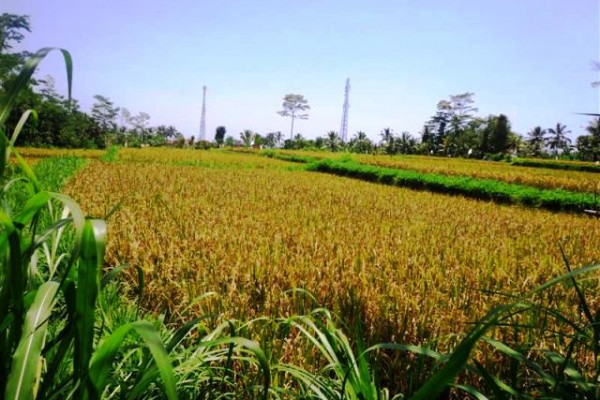 Stunning rice field and river view land for sale in Ubud – TJUB131