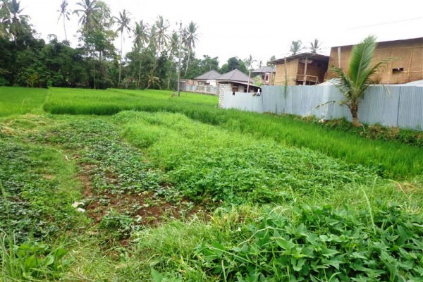 Land for sale in Ubud with rice fields view in Tampaksiring Ubud – TJUB143