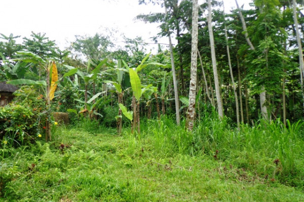 Land for sale in Ubud near to the Pesiden palace Tampaksiring – TJUB145