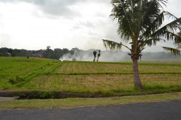 Land for sale in Canggu very nice for villa – TJCG064