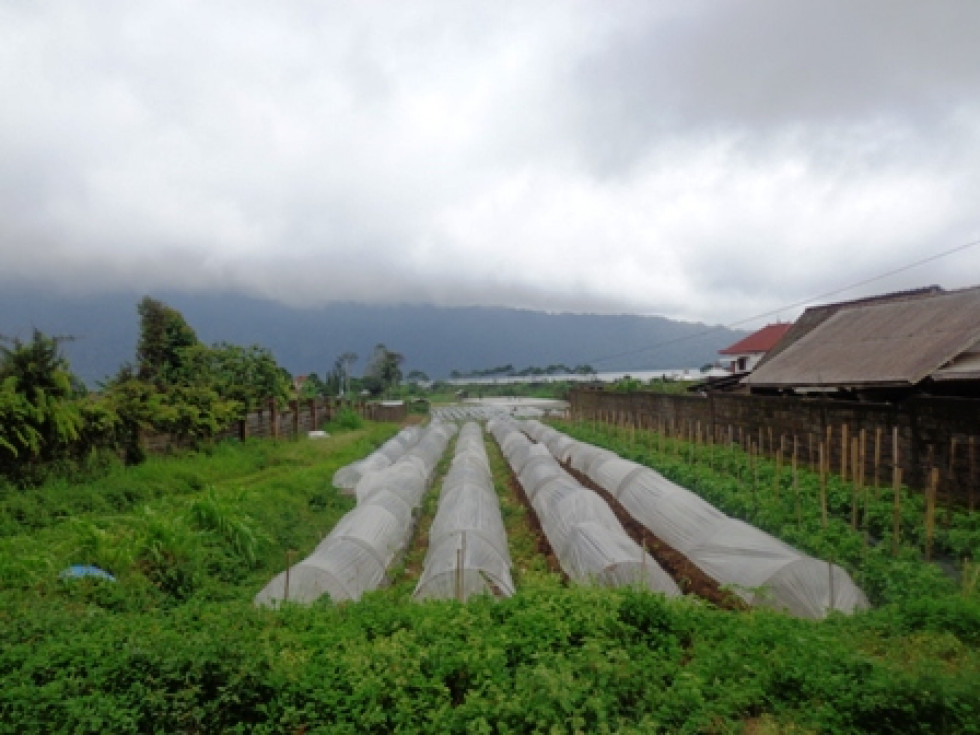 Land for sale in Bedugul Stunning mountain and lake view – TJBE026