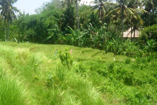 Land for sale in Canggu 200 m2 ready for villa – TJCG079