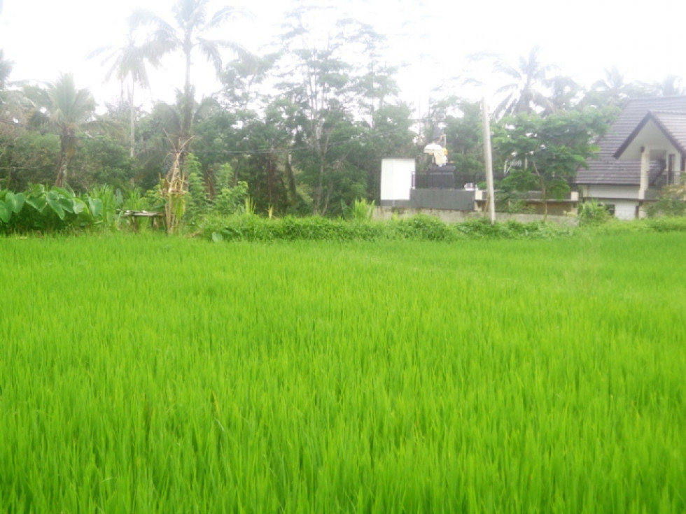 Land for sale in Ubud perfect for villa with rice fields view – TJUB148