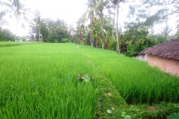 Land for sale in Ubud 28 are Rice fields view in Tegalalang Ubud – TJUB149