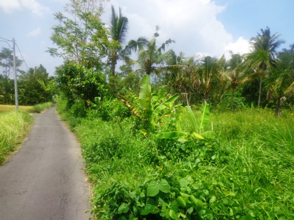 Roadside land for sale in Ubud Magnificent rice fields view near Ubud Center – TJUB150
