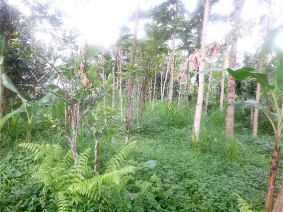 Land for sale in Ubud by the roadside Tegalalang Ubud – TJUB151