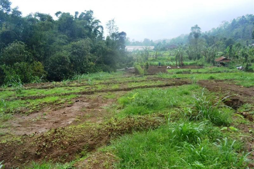 Spacious lush and green valley Land for sale in Bedugul – LBE031