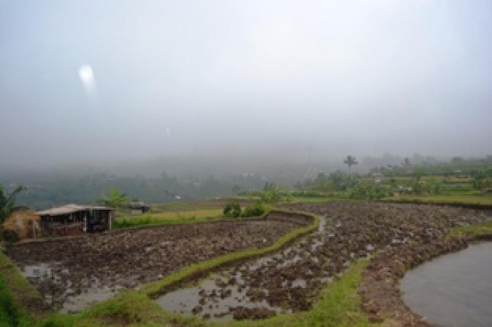 Land for sale in Bedugul Bali beautiful rice fields on the hills